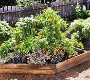 Orgaski vrt - mali povrtnjak